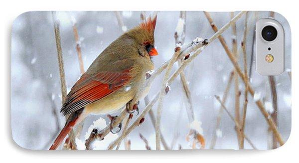 Female Cardinal IPhone Case by Brenda Bostic