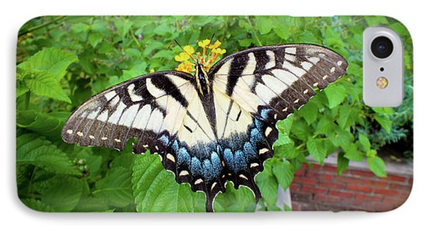 Female Eastern Tiger Swallowtail  IPhone Case