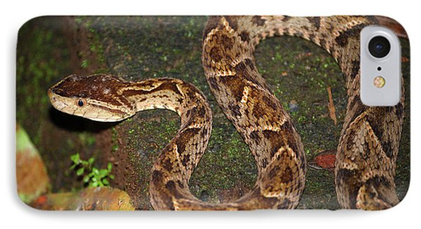 IPhone Case featuring the photograph Fer-de-lance, Bothrops Asper by Breck Bartholomew