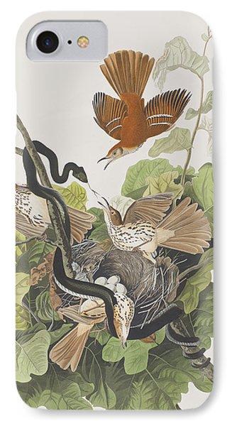 Ferruginous Thrush IPhone Case by John James Audubon