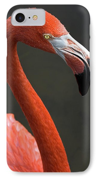 Flamingo Phone Case by Christopher Holmes