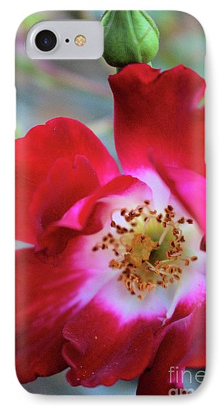 Flower Dance IPhone Case by Victor K