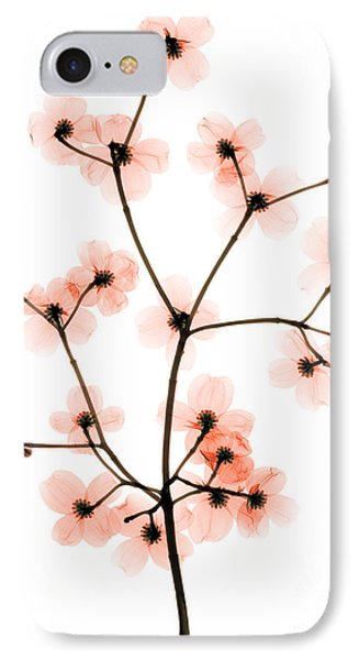 Flowering Dogwood X-ray IPhone Case by Ted Kinsman