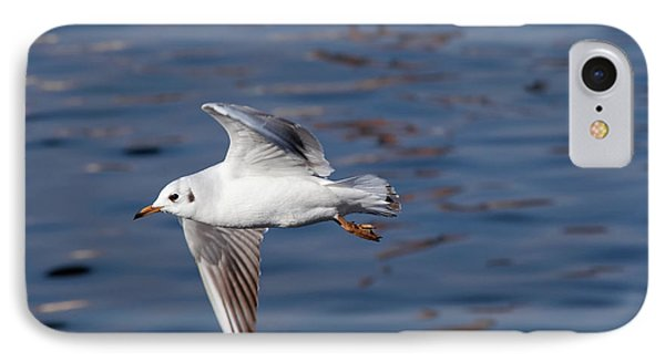 Flying Gull Above Water IPhone Case by Michal Boubin