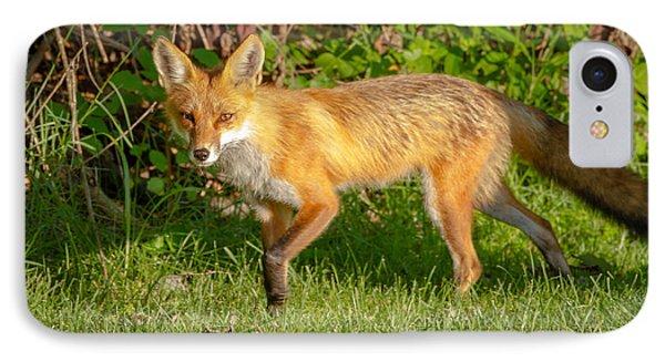 Fox Portrait  IPhone Case by Brian Caldwell
