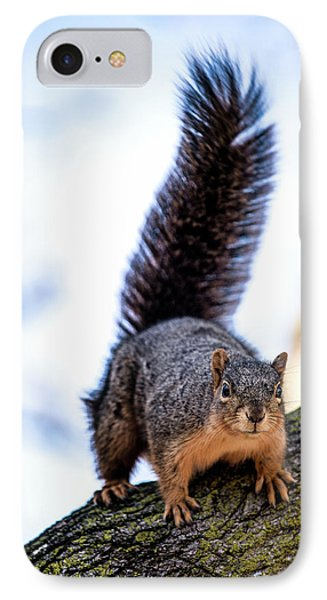 IPhone Case featuring the photograph Fox Squirrel On Alert by Onyonet  Photo Studios