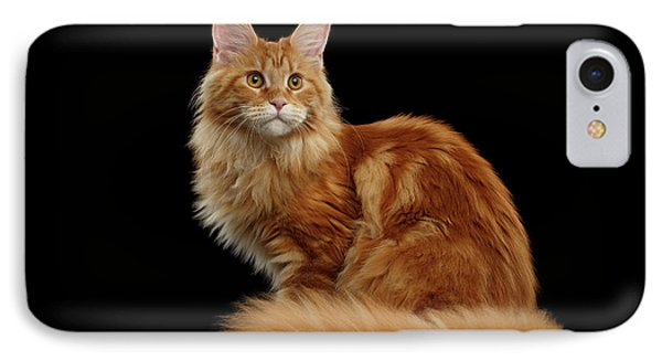 Cat iPhone 7 Case - Ginger Maine Coon Cat Isolated On Black Background by Sergey Taran