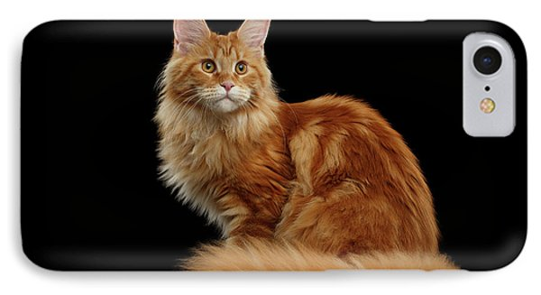 Ginger Maine Coon Cat Isolated On Black Background IPhone Case by Sergey Taran