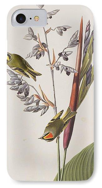 Golden-crested Wren IPhone 7 Case by John James Audubon