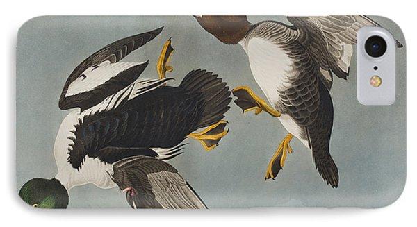 Golden-eye Duck  IPhone Case