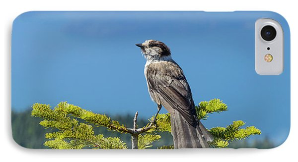 Gray Jay IPhone Case