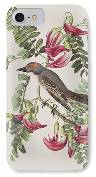 Gray Tyrant IPhone Case by John James Audubon