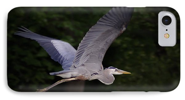 Great Blue Heron In Flight IPhone Case by Brian Wallace