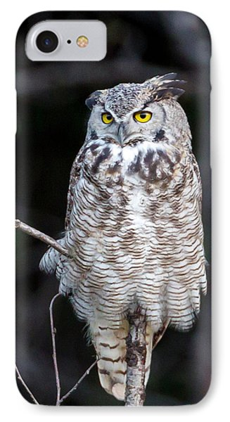Great Horned Owl  IPhone Case by Jack Bell