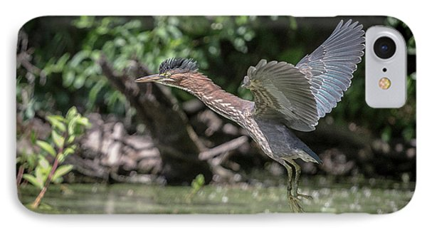 Green Heron Assabet River Massachusetts IPhone Case by Stephen Beyer
