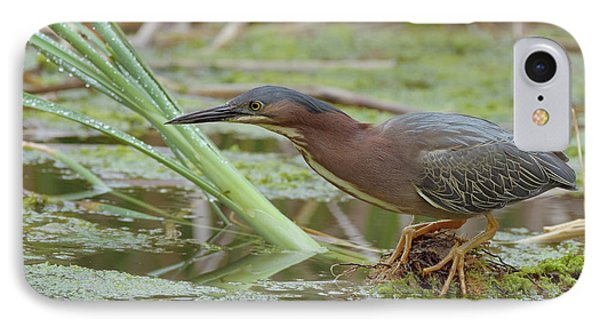 Green Heron Phone Case by Doug Herr
