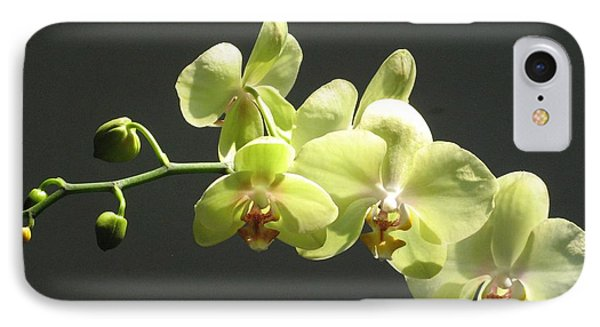 IPhone Case featuring the photograph Green Orchid by Alfred Ng