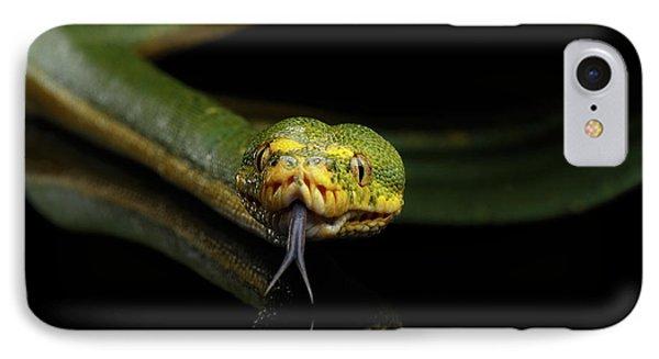 Green Tree Python. Morelia Viridis. Isolated Black Background IPhone Case