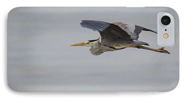 Grey Heron IPhone Case by Jivko Nakev