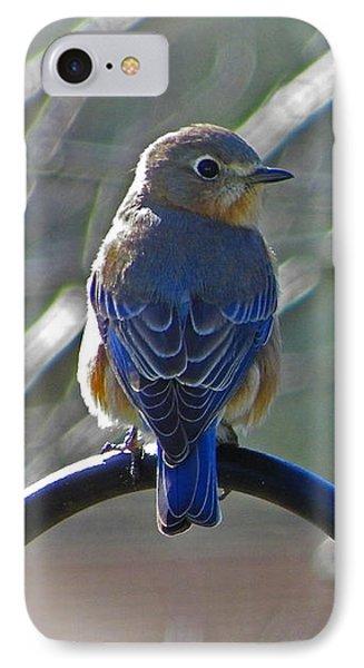 Hello Bluebird IPhone Case