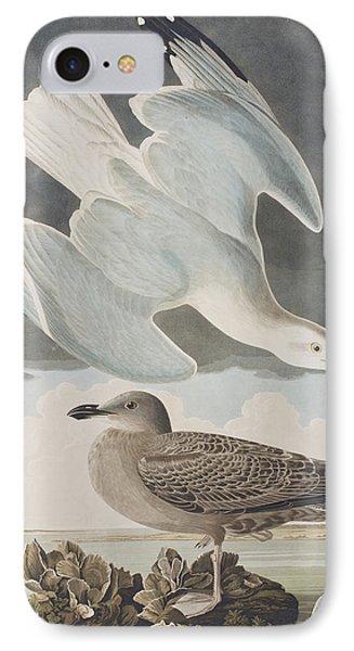 Herring Gull IPhone Case by John James Audubon