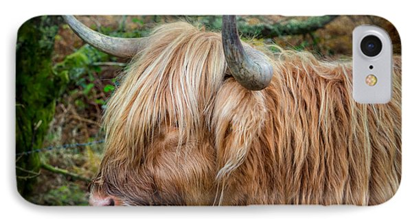 Highland Cow IPhone Case by Adrian Evans