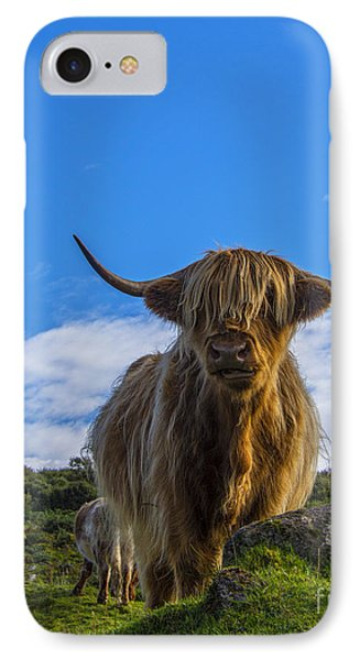 Highland Cow IPhone Case by Chris Thaxter