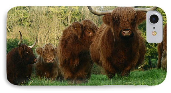 Highland Cows IPhone Case by Angel  Tarantella
