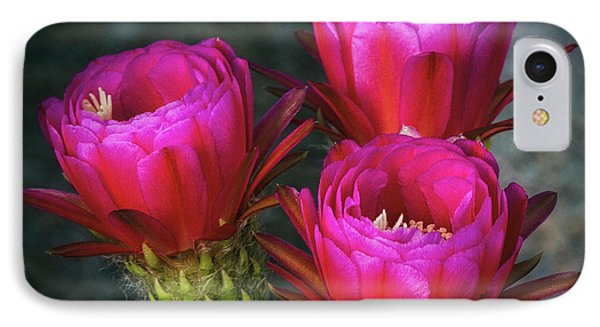 IPhone Case featuring the photograph Hot Pink  by Saija Lehtonen