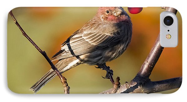 House Finch IPhone Case by Ricky L Jones