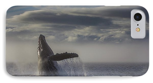 Humback Whale Breaching In Chatham Strait IPhone Case by Wild Montana Images
