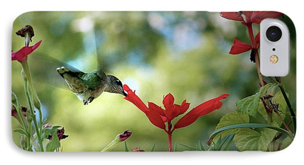 Hummingbird Delight IPhone Case by Sue Stefanowicz
