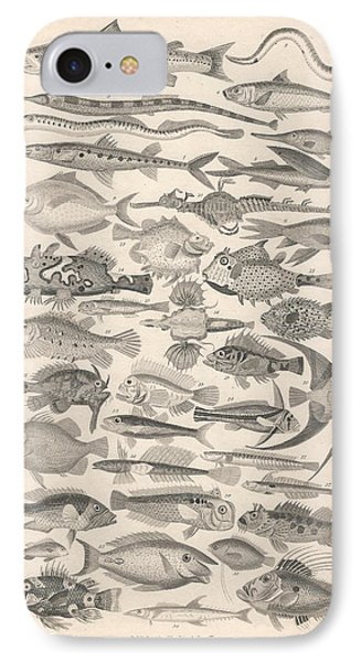 Ichthyology IPhone Case by Rob Dreyer