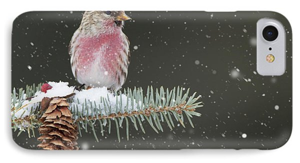 IPhone Case featuring the photograph I'm Not So Common by Gerry Sibell