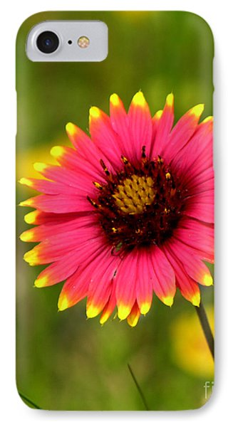 Indian Blanket Phone Case by Paul Anderson