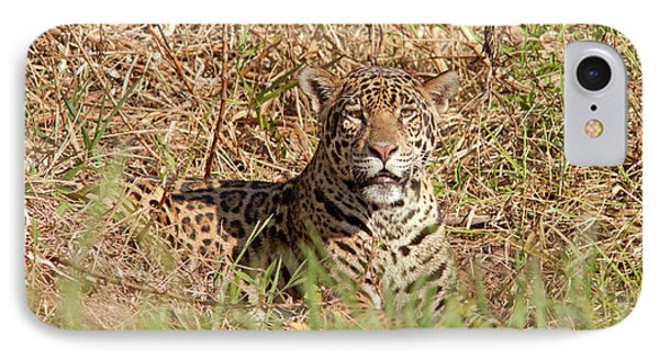 Jaguar Watching IPhone Case