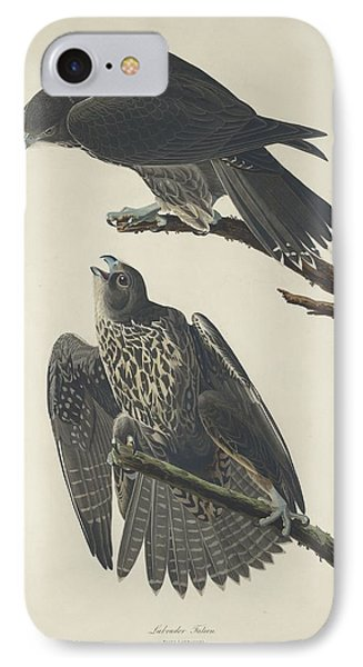 Labrador Falcon IPhone 7 Case by Rob Dreyer