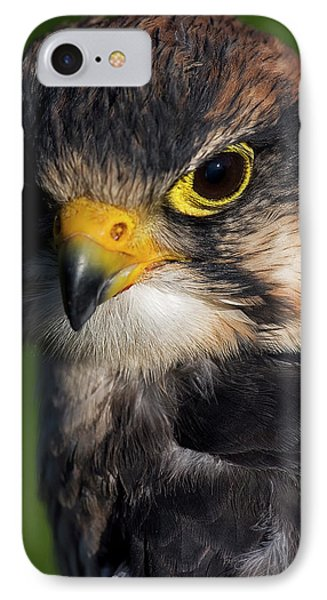 Lanner Falcon IPhone Case by JT Lewis
