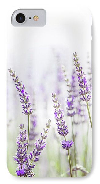 Lavender Flower In The Garden,park,backyard,meadow Blossom In Th IPhone Case by Jingjits Photography