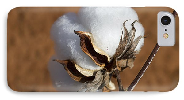 Limestone County Cotton Boll IPhone Case by Kathy Clark