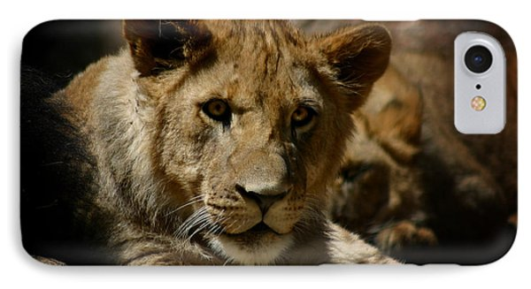 Lion Cub IPhone Case by Anthony Jones