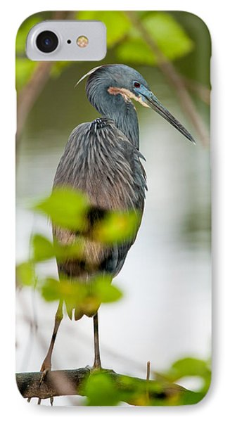 IPhone Case featuring the photograph Little Blue Heron by Christopher Holmes