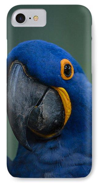 Macaw IPhone Case by Daniel Precht