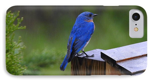 IPhone Case featuring the photograph Male Bluebird  by Brenda Bostic