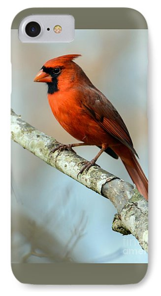 Male Cardinal IPhone Case by Debbie Green
