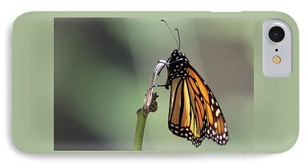 Monarch Butterfly Stony Brook New York IPhone Case