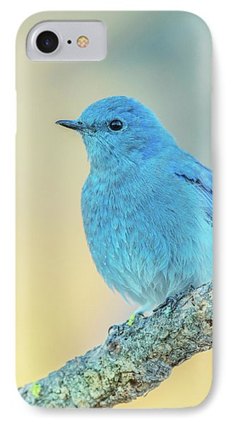 IPhone Case featuring the photograph Mountain Bluebird by Angie Vogel
