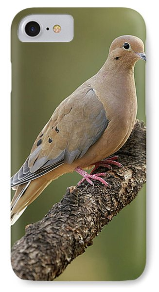 Mourning Dove Phone Case by Doug Herr