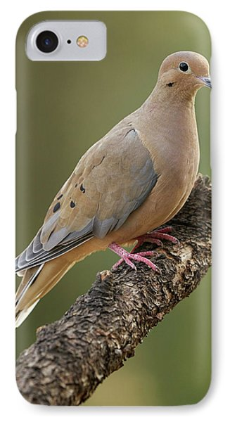 Mourning Dove IPhone Case by Doug Herr