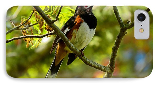Towhee In Song IPhone Case
